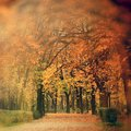 Autumn scenery in park a with golden trees on the alley Stock Photos