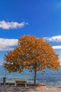 Autumn by the sea side tree on alley in coastal town Stock Images