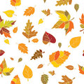 Autumn seamless pattern Royalty Free Stock Photos