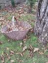 Autumn sensation Royalty Free Stock Photo