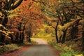 Autumn shades, Gisburn forest, Lancashire Royalty Free Stock Photo