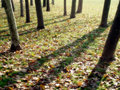 Autumn shadows on falling leaves in a park Royalty Free Stock Photo