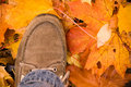 Autumn shoes Stock Image