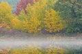 Autumn shoreline hall lake i dimma Royaltyfri Bild