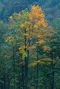 Jeseň v slovenskom lese