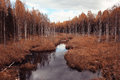 autumn small river among golden forest Royalty Free Stock Photo