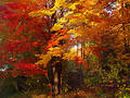 Autumn Splendor Stock Images