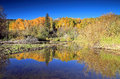 Autumn splendor at a beaver pond in the rocky mountains landscape with golden aspens maroon lake colorado usa Stock Images