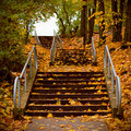 Autumn stairs covered with maple leaves Royalty Free Stock Photo