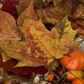 Autumn Still l ife Stock Images