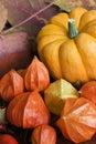 Autumn Still l ife Stock Photography