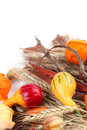 Autumn still life with colorful pumpkins Royalty Free Stock Photo