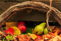 Autumn still life with fruit in leaves on board and vines backgr autumnal apples pears foliage background Stock Photography