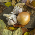 Autumn still life with onion and garlic Stock Photography