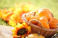 Autumn still life pumpkins in basket and decorative corns defocused colorful leaves in the background Royalty Free Stock Photos