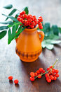 Autumn still life with a red rowan berries on a wooden table Stock Images