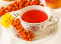 Autumn still life sea buckthorn tea and flowers Stock Images