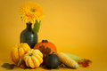 Autumn still life squashes sweet corn sunflower warm yellow background Royalty Free Stock Photos