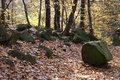Autumn and stones in the beech forest with coloured leaves big wood Royalty Free Stock Image
