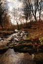 An Autumn Stream Stock Photos