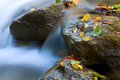 Autumn stream Stock Photos