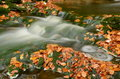 Autumn stream Royalty Free Stock Image