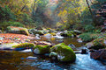 Autumn stream in forest. Stock Images