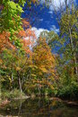 Autumn by a stream in the woods reflections during season Royalty Free Stock Photography