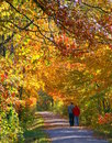 An Autumn Stroll Stock Photo