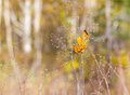 Autumn style background yellow leaf lying on the branches of dried plant with a defocused forest in the dof Royalty Free Stock Photo