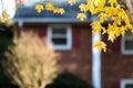Autumn in suburbia background suburban setting Stock Photography