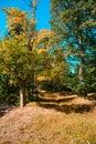 Autumn in Sumava