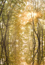 Autumn sun in the branches of a tree Stock Photo