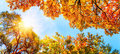 The autumn sun shining through golden treetops Royalty Free Stock Photo