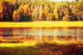 Autumn sunny landscape of Soroti river and autumn yellowed forest trees in Pushkinskiye Gory, Russia Royalty Free Stock Photo