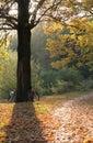 Autumn sunset Royalty Free Stock Photo