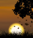 Autumn sunset background Stock Photography