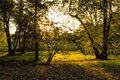 Autumn sunset in a natural park Stock Image