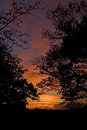 Autumn sunset trees silhouetted in an fall Stock Photos