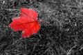 Autumn Symbol