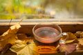 Autumn tea Stockbild