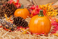 Autumn theme Royalty Free Stock Image