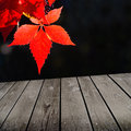 Autumn theme and empty wooden deck table ready for product montage display Stock Photography