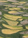 Autumn in Tibet, Himalayas: yellow ovals of fields, green areas of grass clover and plots with harvested stacks, vertical frame. Royalty Free Stock Photo