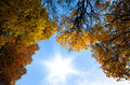 Autumn tops of trees on background blue sky and shining sun Royalty Free Stock Photo