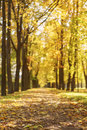 Autumn town alley with golden fall trees and fallen leaves Royalty Free Stock Photo