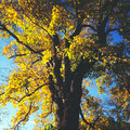 Autumn tree Stock Photography