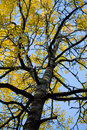 Autumn tree against blue sky Royalty Free Stock Photography