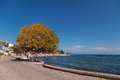 Autumn tree on the alley in the coastal town by sea side Royalty Free Stock Photos