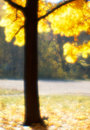 Autumn tree blurred  monocle. Stock Photo